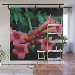 Coral Pink Trumpet Honeysuckle Wall Mural