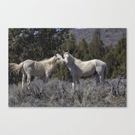 Wild Horses with Playful Spirits No 1 Canvas Print