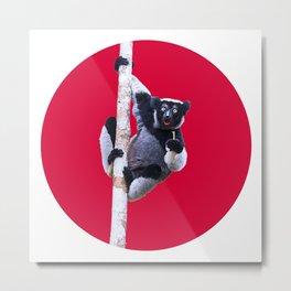 Indri indri sitting in the tree Metal Print