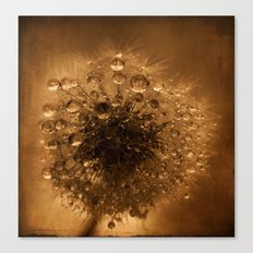 dandelion rust Canvas Print