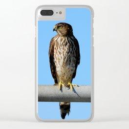 Juvenile Cooper's Hawk Clear iPhone Case