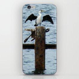Resting cormorants iPhone Skin