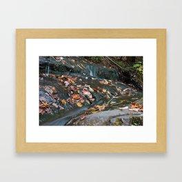 Forest Stream Framed Art Print