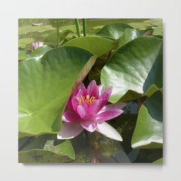 pink water lily XI Metal Print