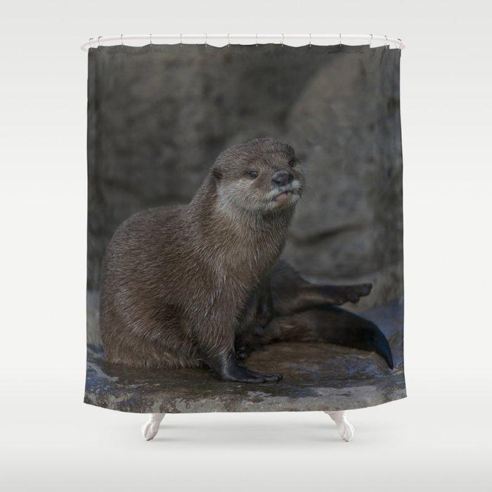 Otter Shower Curtain By Rawshutterbug