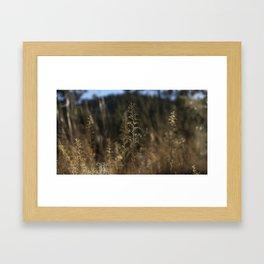 Delicate Grass Framed Art Print
