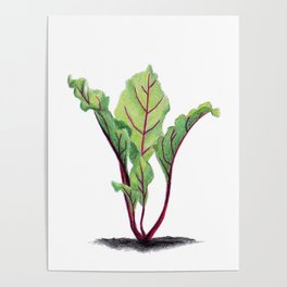 Red beet plant pencil drawn Poster