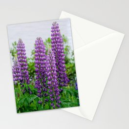Lupinus Stationery Cards