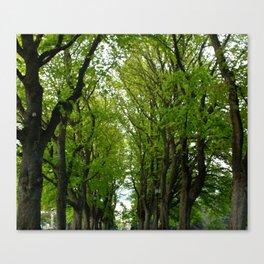 Tree Lined Walkway Photography Print Canvas Print