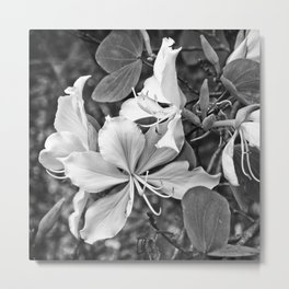 Beautiful butterfly tree flower Metal Print