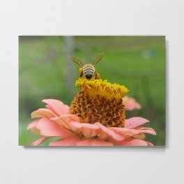 Busy Bee on Zinnia Metal Print