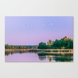 Swans are flying Canvas Print