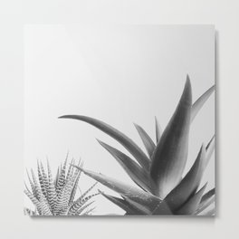 Succulents II Metal Print