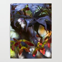 Japanese Maple Seeds III Poster