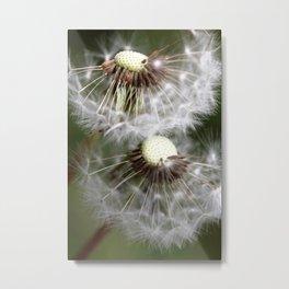 Dandelion 2013 no.6 Metal Print