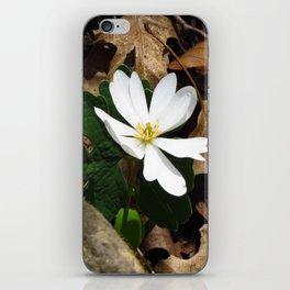 Bloodroot in Bloom iPhone Skin