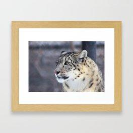 Concerned Mama Snow Leopard Framed Art Print