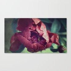 Peony Red flower Canvas Print