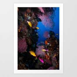 Tropical Fish Great Barrier Reef Coral Sea Art Print