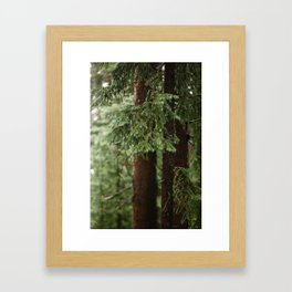 Mossy Pine Framed Art Print