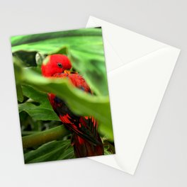 Red Lory Stationery Cards