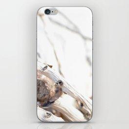 Drifted Palm iPhone Skin