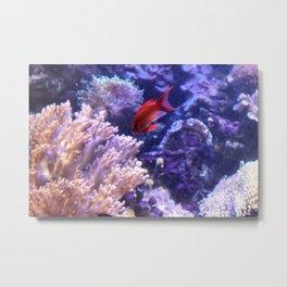 Lonely Fish Metal Print