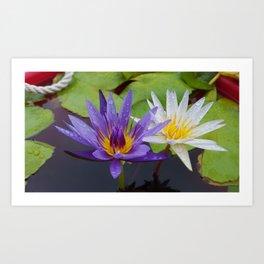 Loving Lotuses Art Print
