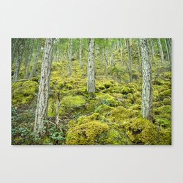Mossy Forest Floor Canvas Print