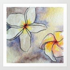 Plumerias Art Print