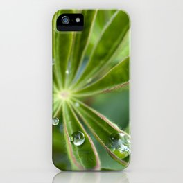 Lupin after rain 5111 iPhone Case