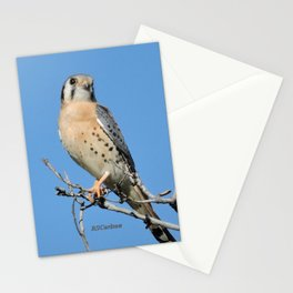 A Kestrel Says Hello Stationery Cards