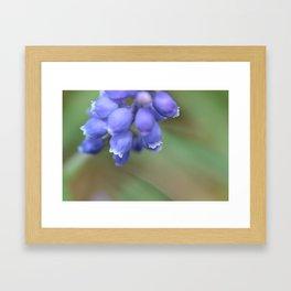 blue bells Framed Art Print