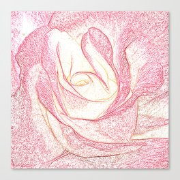 Summer Rose Pencil on White Canvas Print