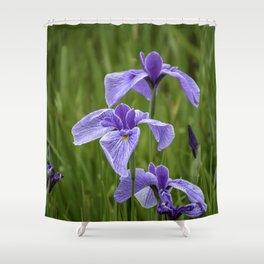 Sankeien Garden Iris Shower Curtain