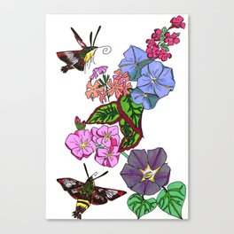 Hummingbird Moths in the blooms of France Canvas Print