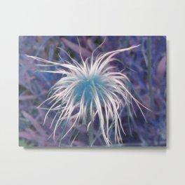 Flower (Western Pasque) Metal Print