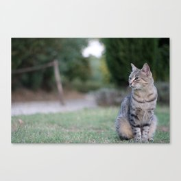 Composed Canvas Print