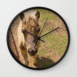 Curious miniature horse foal Wall Clock