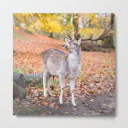 Nature Habitat Metal Print