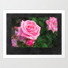 Pink Roses in Anzures 1 Blank P4F0 Art Print