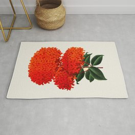 Vintage Scientific Flower Illustration Large Red Flowers Large Orange Petals Rug