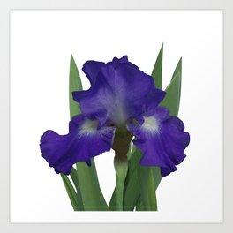 Stellar Lights, Deep blue-violet Iris Art Print