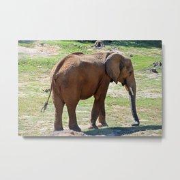 A Season for Elephants Metal Print