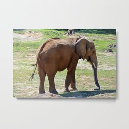 A Season for Elephants Metal Print
