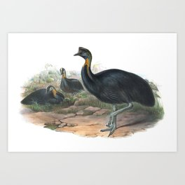 Northern Cassowary, tropical bird in the nature of New Guinea Art Print