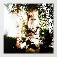 birch Canvas Prints featuring birch by Eva Lesko
