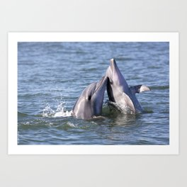 Playful Dolphins Art Print
