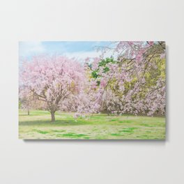 cherry blossoms blooming in a fantastic garden Metal Print