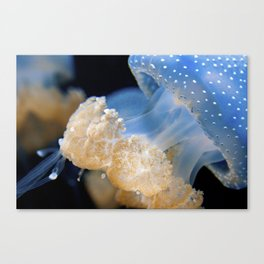 Underwater Macrophotography - Jellyfish Canvas Print